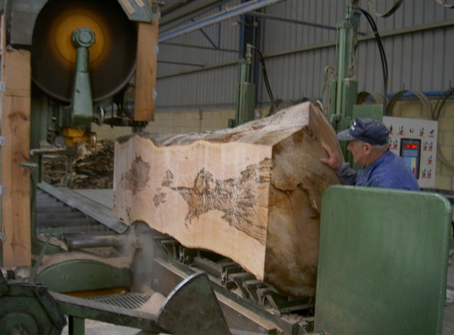Aserraderos de madera en venta